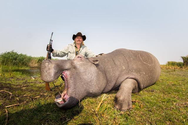 CB Hippo